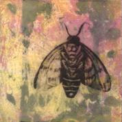 "SOLD - ""Odilon's Bee"", Encaustic Mixed Media on Panel, 4 x 4 x .75 inches, 2015"